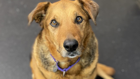 Limelight Pet Project: Meet Daisy!