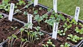 Weekend gardening outlook: nice Saturday, soggy Sunday