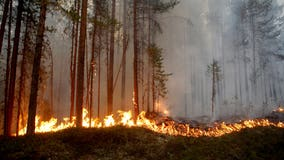 At least 1/3 of Washington wildfires could have been prevented