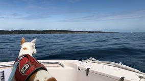 Poop-detecting dog helps sniff out key problems for endangered orcas