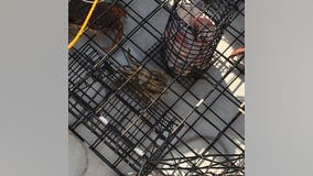Park Ranger goes crabbing off Whidbey Island and finds Jesus