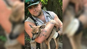 Man rescues fawn tangled underneath logging machine on Camano Island