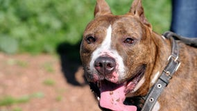 Tips for pet owners ahead of Washington's heat wave