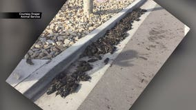 Hundreds of birds fall out of the sky in Utah