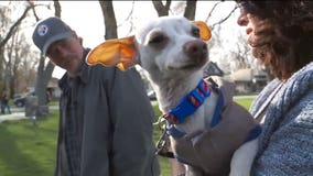 Homeless man saves abandoned pup, gets unexpected surprise