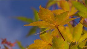 Gardening with Tim: How to add fall colors to your yard and garden