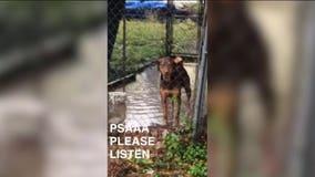Dog left in flooded kennel sparks outrage on social media