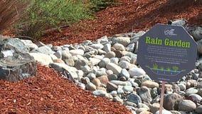 Everett rain gardens offer solutions to pollution