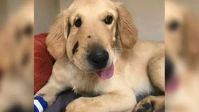 Hero puppy protects owner from rattlesnake