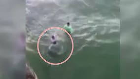 Video shows shark biting man at North Carolina beach