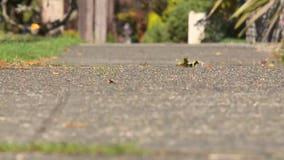Play Street permits return to encourage outdoor activities in Seattle neighborhoods