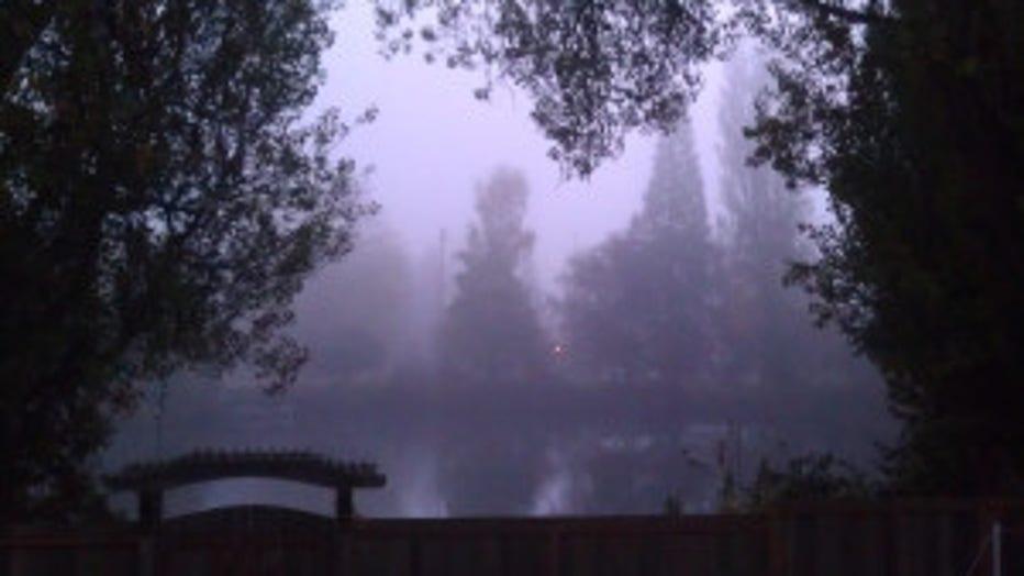 FogShoreline