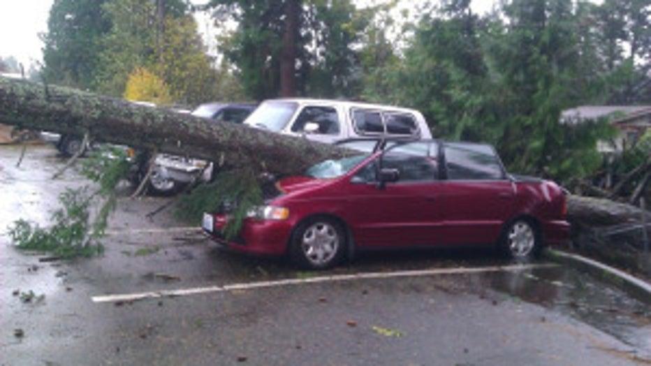 A tree falls on a car