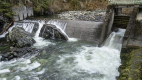 Washington river dam demolished to open miles of salmon habitat