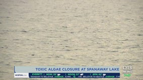 Toxic algae closes Spanaway Lake ahead of holiday weekend