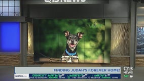 Judah needs a forever home