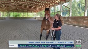 Meet Alder with the Limelight Pet Project