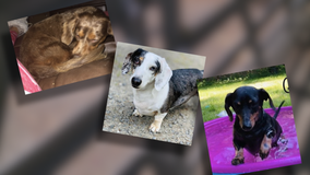 Kitsap County woman pleads for the return of her three stolen dogs