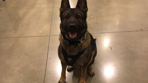'Their bond was undeniable': Tacoma PD mourns loss of K9 killed in gunfight with homicide suspect