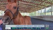 Limelight Pet Project: Meet Beauty