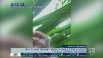 Monkey who stole phone takes epic selfie video