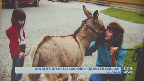 Wildlife officials warn Olalla area residents to keep pets and livestock secure after cougar kills donkey