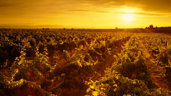 Wildfires in West affect wine grape harvest in Yakima Valley