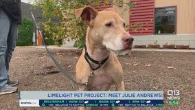 Limelight Pet Project: Meet Julie Andrews