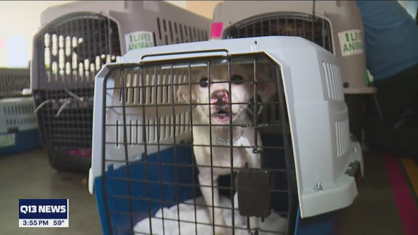 Hundreds of shelter dogs, cats flown across the Pacific to Washington for adoption