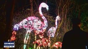 Woodland Park Zoo brightens holiday season with new lantern festival