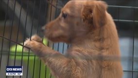 Motley Zoo halts lifesaving animal rescue services due to lack of donations during pandemic