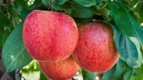Washington state apple exports drop substantially in 2020-21 due to pandemic