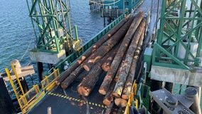 Log truck loses load at Edmonds ferry dock; Edmonds/Kingston routes back in service