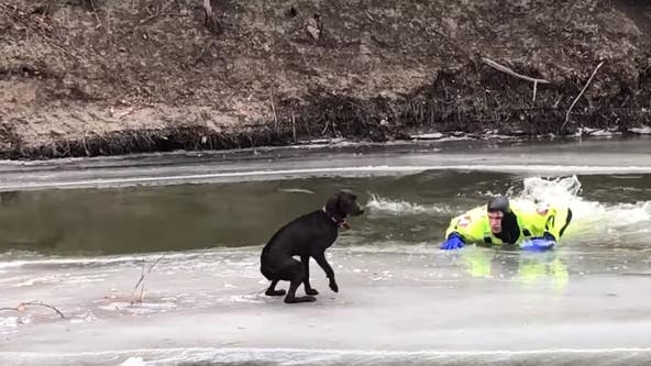 Deputies rescue dog stranded on ice chunk on North Dakota river