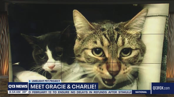 Limelight Pet Project: Meet Gracie and Charlie