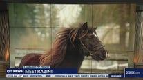 Pet of the Week: Razin