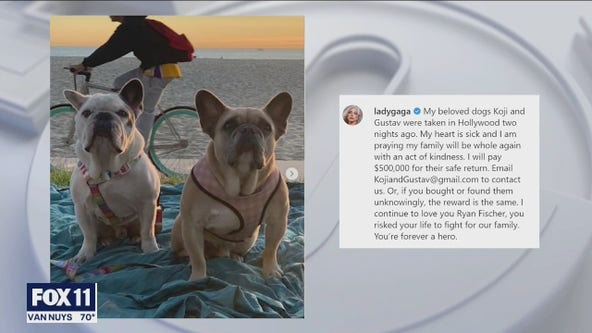 Lady Gaga's two stolen French bulldogs safely reunited with singer's representatives