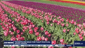 Skagit Valley Tulip Festival back on for 2021 with some changes
