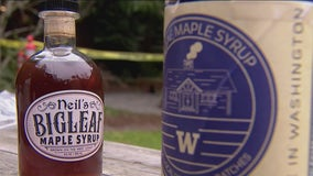UW scientists tap into potential for maple syrup industry in Washington