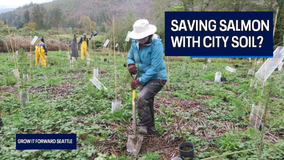 Can city soils help save salmon? One new environmental group thinks we can.