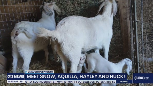 Pet of the Week: Meet this cute goat family!