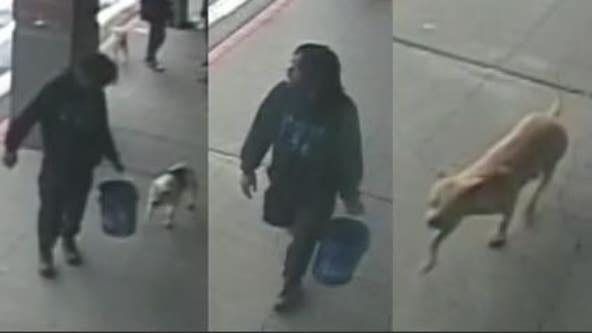 Help ID 'person of interest' in brutal beating of grocery store shopper