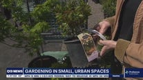 Gardening with Tim: Making the most of small spaces