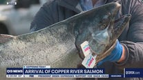 Copper River salmon arrives in Seattle