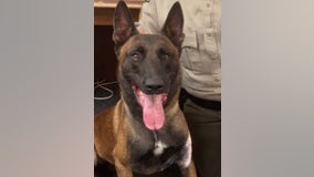 Georgia deputy demoted after K-9 officer's death in hot car