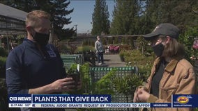 Gardening with Tim: Plants that give back