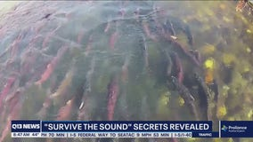 Survive the Sound secrets revealed
