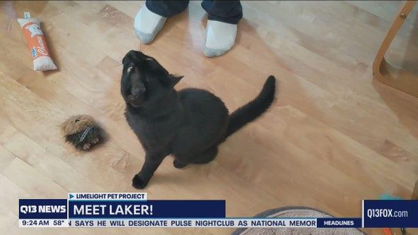 Pet of the Week: Laker