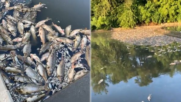 More than 50,000 dead fish found floating in Kansas City stream