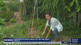 How to keep your plants healthy in the heat